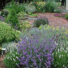 Starting a Herb Garden | Sweet Valley Herbs I love the layout of this herb garden