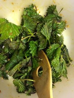 Yup, just like the title says. Stinging nettles (Urtica dioica), the darling of wild springgreens, make really great, really healthy and really free (minus labour. yours, lots of it) crisp/chips! …
