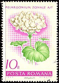 Romania.  VARIOUS GERANIUMS.  Scott 2019  A626, Issued 1968 July 20, Photo., Perf. 13 1/2,10. /ldb.