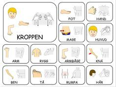 Teckenkartor – Fröken Ljusta Speech Language Therapy, Speech And Language, Learn Swedish Online, Sign Language Book, Body Preschool, Swedish Language, Pre School, Children, Kids