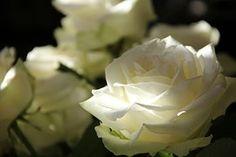 Rosas, Flores, Caminho Das Rosas