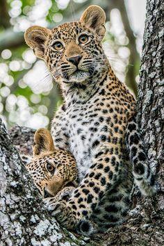 Pin by Klaudia Krajnc on Wildkatzen Wildlife Nature, Nature Animals, Animals And Pets, Baby Animals, Funny Animals, Cute Animals, Wild Animals, Big Cats, Cats And Kittens