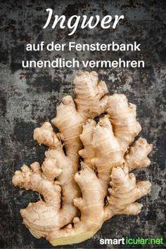 Guter Ingwer in Bio-Qualität ist teuer. Da lohnt es sich auch mal über den Eigenanbau nachzudenken!