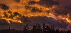STORM IS NEAR  by Sam Okamoto - Landscapes Cloud Formations ( clouds, silouette, shadow, sunset, dark sky, forest, storm )