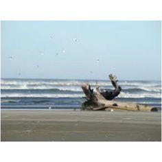 Ocean Shores WA