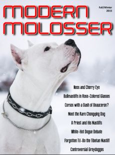 In this issue: Neos and Cherry Eye ... Bullmastiffs with rose-colored glasses ... Cane Corsos with a dash of Beauceron? ... China's rare Chongqing Dog ... A priest and his Mastiffs ... White-hot Dogue debate ... Forgotten Tu-Bo the Tibetan Mastiff ... Controversial Greydogges ... and much, much more!