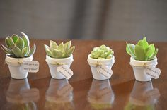50 Mini Succulent Favors with Tag in ANY color with Custom Names or Saying- Weddings, Bridesmaids, Place cards, Favors, Gifts by StellaDesignsShop on Etsy https://www.etsy.com/listing/250287997/50-mini-succulent-favors-with-tag-in-any