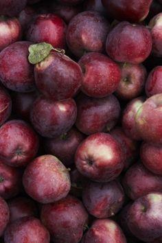 Harvesting Grapes...
