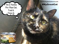 Melissa's Mochas, Mysteries and Meows: Don't Tell Me She's Spoiled, #MyGreatCat Deserves the Very Best! Visit Purina Pro Plan's website and grab a coupon for a FREE CAN! #MyGreatCat #ad ooh.li/7a04579