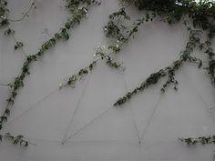 Treliça de cabo de varal. Querida o muro sumiu | A Menina do Dedo Verde