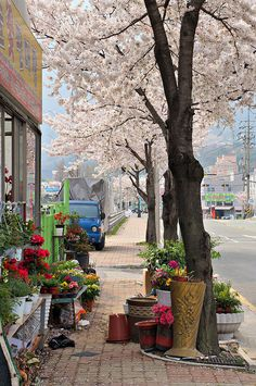 Colorful Spring, Yangsan, South Korea