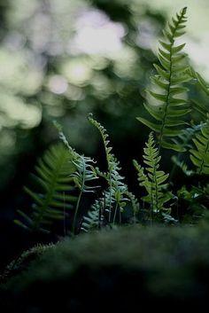 cuiledhwenofthegreenforest:  green flames (green meyer-primoplan...