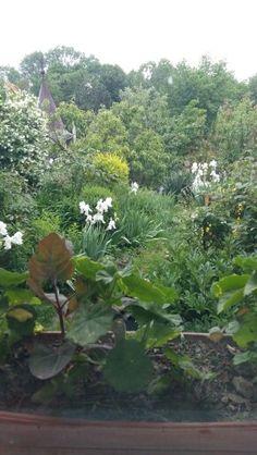 My rainy garden