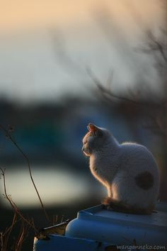 778:  残照: Cats on the shore ~海辺に生きる猫たちの記憶~