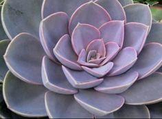Romlik a szemed, hízol, tele vagy méreggel? Ezt kell fogyasztanod! - MindenegybenBlog Succulents, Health Fitness, Plants, Succulent Plants, Plant, Fitness, Planting, Health And Fitness, Gymnastics