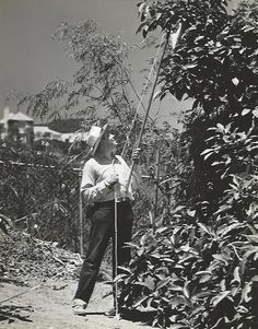 """Original, vintage photo of Nelson Eddy in his orchard. Back of the photo states: """"GENTLEMAN FARMER: Nelson Eddy proudly displays some of the limes grown by himself at his recently completed home. The Metro-Goldwyn-Mayer singing star finds his greatest relaxation working in the gardens and around his home. He recently completed 'The Chocolate Soldier' with Rise Stevens."""" - ESCANO COLLECTION"""