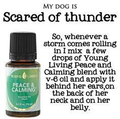 Is your dog scared of thunder? Essential Oils Dogs, Essential Oil Uses, Doterra Essential Oils, Young Living Essential Oils, Doterra Blends, Young Living Pets, Oils For Dogs, Yl Oils, Living Oils