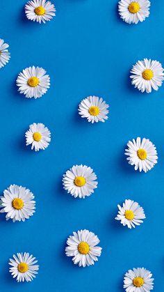 Flowers on blue background Daisy Wallpaper, Flower Phone Wallpaper, Iphone Background Wallpaper, Pastel Wallpaper, Blue Wallpapers, Tumblr Wallpaper, Pretty Wallpapers, Aesthetic Iphone Wallpaper, Screen Wallpaper