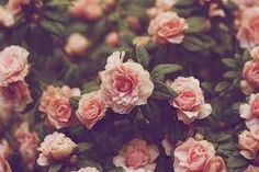 Resultado de imagem para tumblr photography vintage flowers