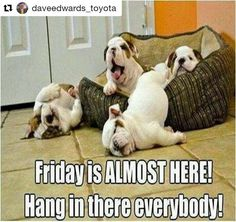 TGIF! #Repost @daveedwards_toyota  #ThursdayThoughts Did you know that our dealership is a dog friendly environment? Not many dealerships can say that! #daveedwardsdifference #puppy #dogs #dogfamily #TGIF #upstatesc #Spartanburg #Greenvillesc #yeahthatGreenville #yeahthatspartanburg #hubcity #sparklecity #lovewhereyoulive #spartanburgrocks #spartanburgontherise #theburg #sc #southcarolina #igersgreenville #visitgreenvillesc #gvltoday #instagvl #greenville360 #southcarolina #spartanburgsc…