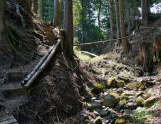 Sentier des Sorcières en Gruyère Trunks, Plants, Pathways, Ride Or Die, Hobbies, Drift Wood, Planters, Plant, Planting
