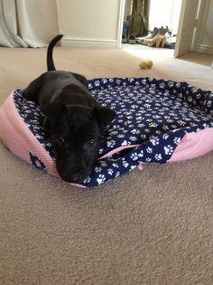 Bo my gorgeous Patterdale Terrier