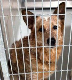 URGENT ANIMALS IN IRVING TX STRAYS AND OWNER SURRENDERS IRVING ANIMAL CARE CAMPUS 4140 VALLEY VIEW LANE IRVING, TX. 75038 972-721-2256