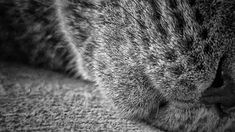 Azını burnunu yedim 😎 #catlovers #cats #bw #photooftheday #blackwhite My Photo Album, Cat Lovers, My Photos, Black And White, Cats, Animals, Gatos, Animales, Black N White