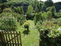 Garden in Dorset, March 2014.