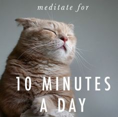 New Blog Post Meditatino....http://agapeprinciple.com/2015/05/31/mediation-is-for-everyone/  #mediation #Agapeprinciple #agapelove #agape #love #cat #meditatingcat