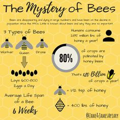 The Mystery of Bees! #quotes #illustration #ideas #love #beauty #beekeeping #beekeeper #apiary #style #words #education