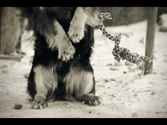 Help end one of the worst forms of animal cruelty in our nation! Countless people leave dogs chained 24/7, some without food & water, some get tangled & die, many perish in the ice & snow, and blistering heat of summer. Until the laws are changed, we are forced to look away, as it is...