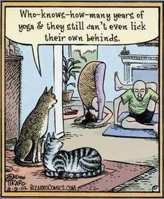 Cats and Yoga. What do humans know about Yoga? Funny Cartoons, Funny Cats, Funny Animals, Funniest Animals, Silly Cats, Cat Memes, Funny Memes, Hilarious, Yoga Gato