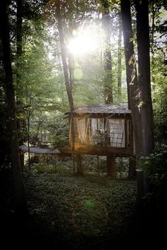 Life in the Trees: Man Links Three Cool Treehouses in the Forest