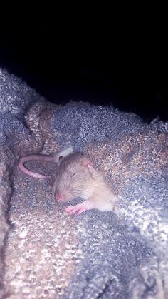 I am envious of this kind of sleep http://ift.tt/2sGQNlK