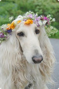 dog flower crown ToniK ❀Flowers in their coats❀ All Dogs, I Love Dogs, Cute Dogs, Dogs And Puppies, Doggies, Beautiful Dogs, Animals Beautiful, Animals And Pets, Cute Animals