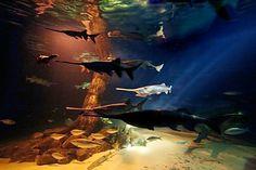 Oklahoma Aquarium in Jenks, OK