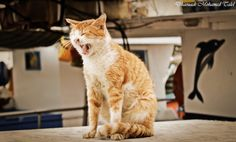 cat by Med Talel Dhaouadi on 500px