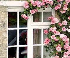 (1) pink | Tumblr