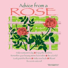 Advice from a rose