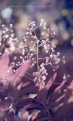 """~Spring Pirouettes~ """"Perfumes are the feelings of flowers.""""  ~ Heinrich Heine"""