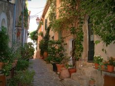 Ramatuelle : Narrow street lined with flowers, plants in jars and houses with facades covered by creepers