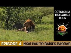 A My Life in Africa 14 day very wet tour of Botswana, in this episode we head to Nxai Pan National Park. Nxai Pan National park is a wonderful park for game . National Parks, Africa, Tours, Big, Youtube, Youtubers, Youtube Movies