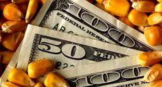 dollars and corn