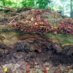 """Compost Strata (needs to be turned over!) That stuff on the bottom is what we call """"black gold."""""""
