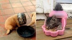 Állatok beszorulva - Terasz | Femina Fun Fair, Dog Bowls