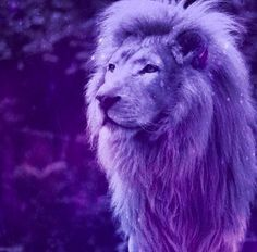 Purple Lion <3