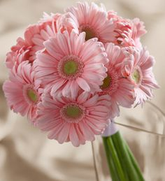 Soft pink daisy bouquet, click for details