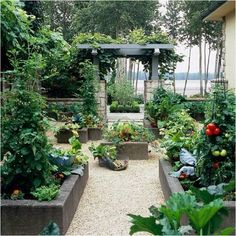Vege garden with poured concrete raised beds.