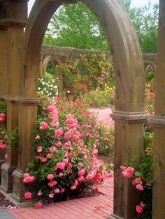 Lush pink shrub roses at arched entrance to ancient garden